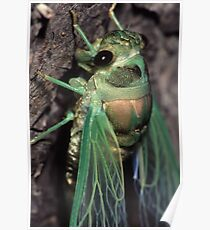Cicada of Emerald & Gold Poster