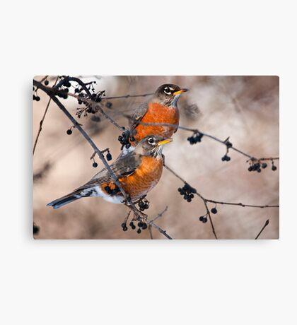 American Robins Canvas Print