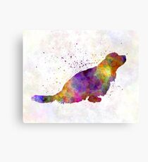 Sussex Spaniel in watercolor Canvas Print