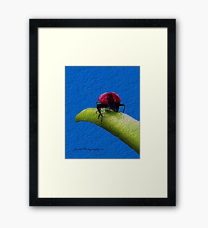 The End Of The Day   ( Ladybug Series ) Framed Print