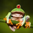 Funny Cyclopic Frog by Kitty Bitty