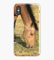 Brown Stallion Grazing iPhone Case/Skin