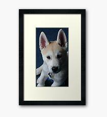 Nymeria the puppy dog Framed Print
