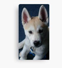 Nymeria the puppy dog Canvas Print