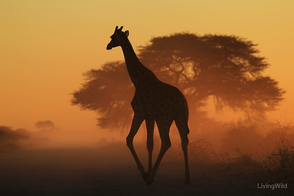 Giraffe - African Wildlife Background - Triangles in Nature by LivingWild