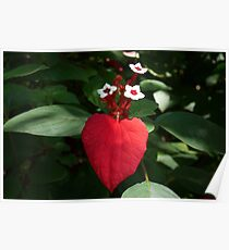 Close-up, red leaf Poster