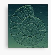 Geology Theme Ammonite in Blue-green and Grey Canvas Print
