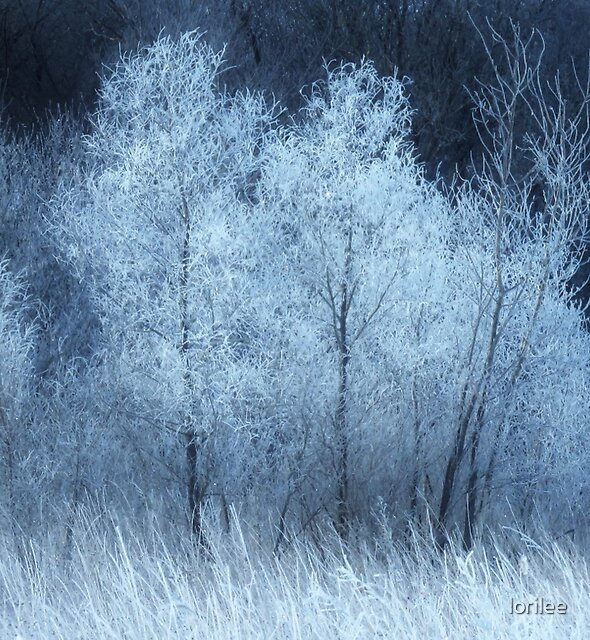 The Enchanted Forest  by lorilee