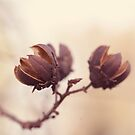 Dried Remnants of Last Fall by Tracy Jones