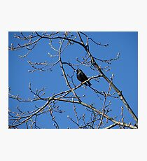 Starling in Spring Photographic Print