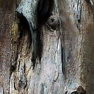 Bark abstract patterns. by ronsphotos