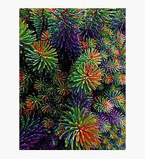 Multi-Coloured Plant Photographic Print