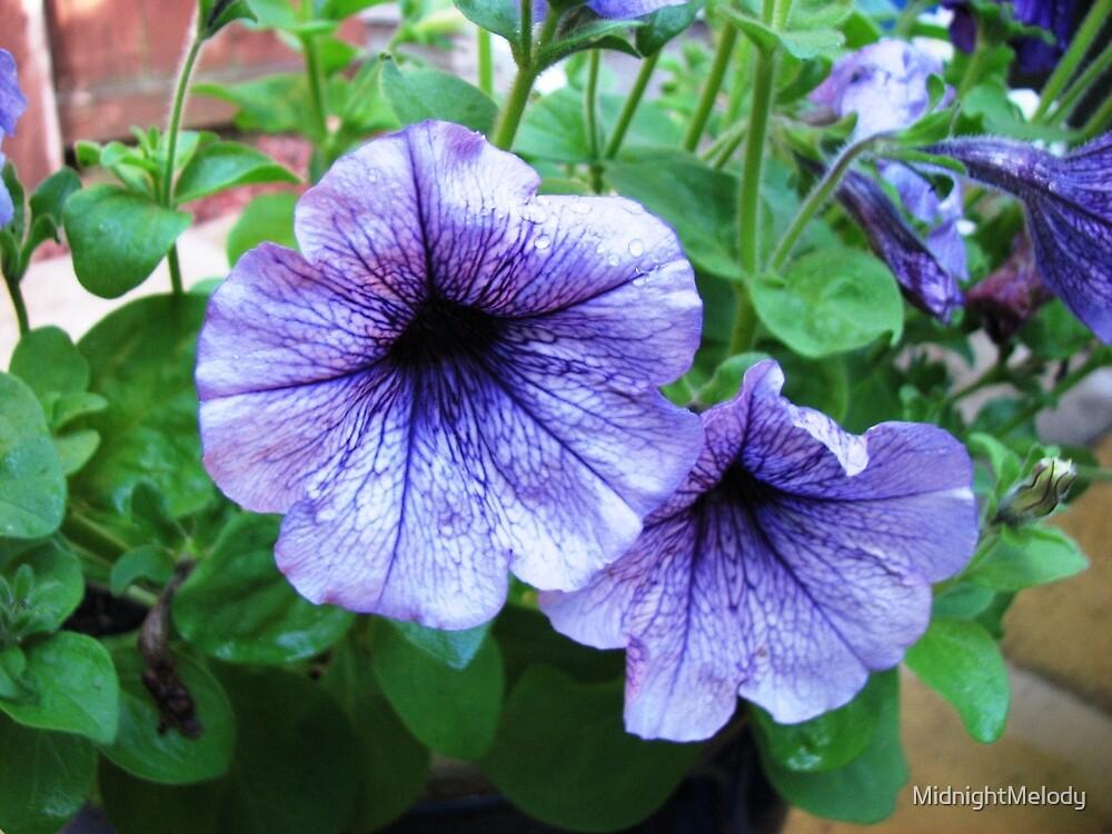 Pretty Purple Surfinias by MidnightMelody