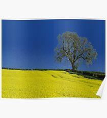The Oak Tree ( Landscape ) Poster
