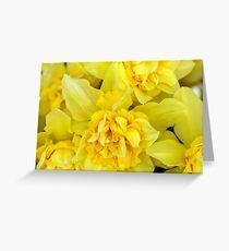 Yellow daffodils macro Greeting Card
