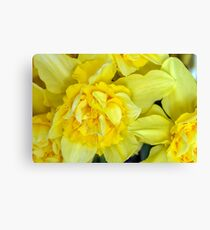Yellow daffodils macro Canvas Print
