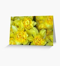Yellow narcissus macro Greeting Card