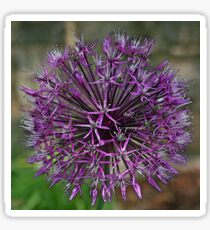 Allium Sticker