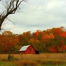 Autumn Colors by Grinch/R. Pross
