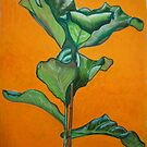 Large rubber plant  by Woodie