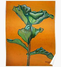 Large rubber plant  Poster