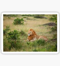 Lion on the Masai Mara Sticker
