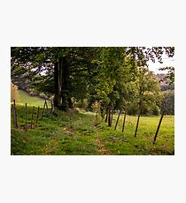 Meadow Grass Path Photographic Print