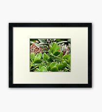 Kenya Grasshopper Framed Print