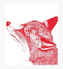 Quirky Fox Photographic Print
