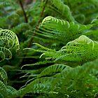 verdant by Jan Stead JEMproductions