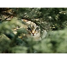 Cat Photographic Print