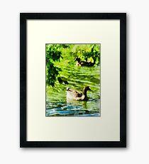Ducks on a Tranquil Pond Framed Print