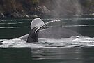Humpback Whales in Motion by WorldDesign