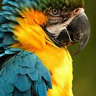 Macaw with Ruffled Feathers by WorldDesign