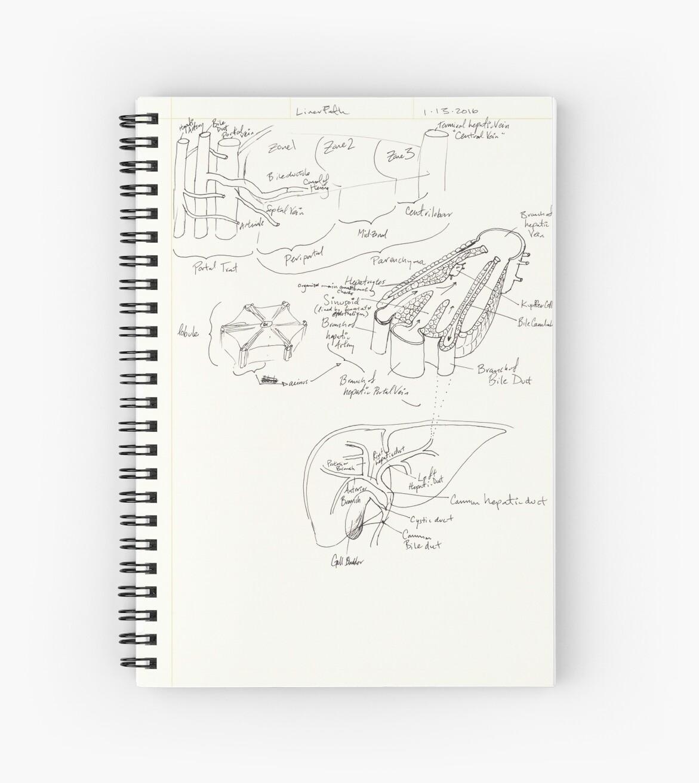 Cuadernos de espiral «tríada portal y hepatocitos en lóbulos dentro ...