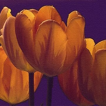 Gold Variegated Tulips by abigailryder