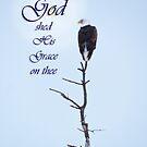 Bald Eagle in Tree Top God's Grace by Deb Fedeler