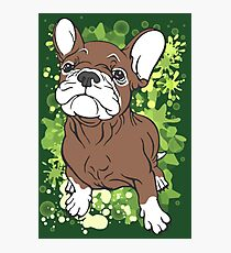 French Bull Dog Cartoon Brown and White Photographic Print