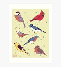 Backyard Birds Art Print