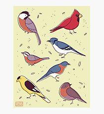 Backyard Birds Photographic Print