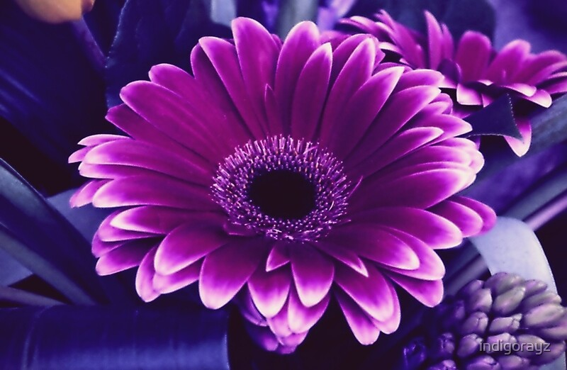 Quot Purple Gerber Daisies Quot Laptop Skins By Indigorayz Redbubble