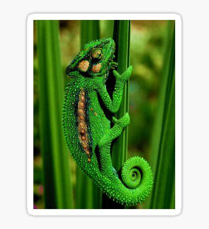 Cape Dwarf Chameleon II Sticker