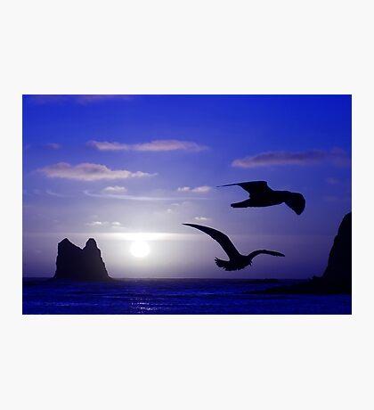 the double bird blues Photographic Print