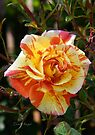 Sunshine Rose by LoneAngel