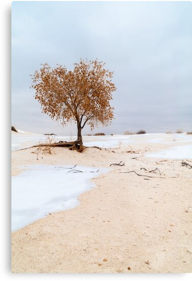 White Sands Lone Tree by Brian Harig