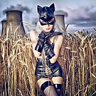 Silverrr cat in the field of gold by Michal Tokarczuk