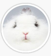grumpy rabbit | bunny nose snob fluffy jersey wooly angora dwarf funny binky grey white cute animal eyes Sticker
