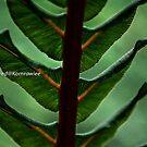 Nature lines, Fern by Kornrawiee