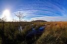 Everglades Expanse by Bill Wetmore
