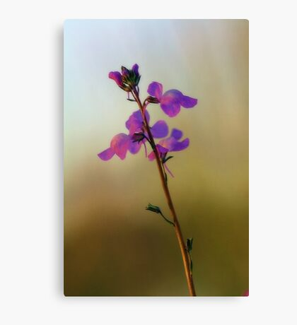 Blue Toadflax Canvas Print